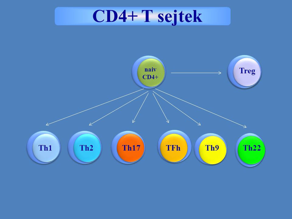 CD4+ T sejtek naiv CD4+ iTreg Treg Th1 Th2 Th17 TFh Th9 Th22