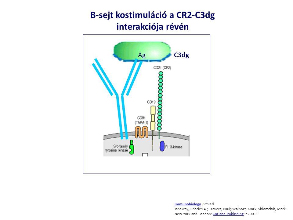 B-sejt kostimuláció a CR2-C3dg interakciója révén
