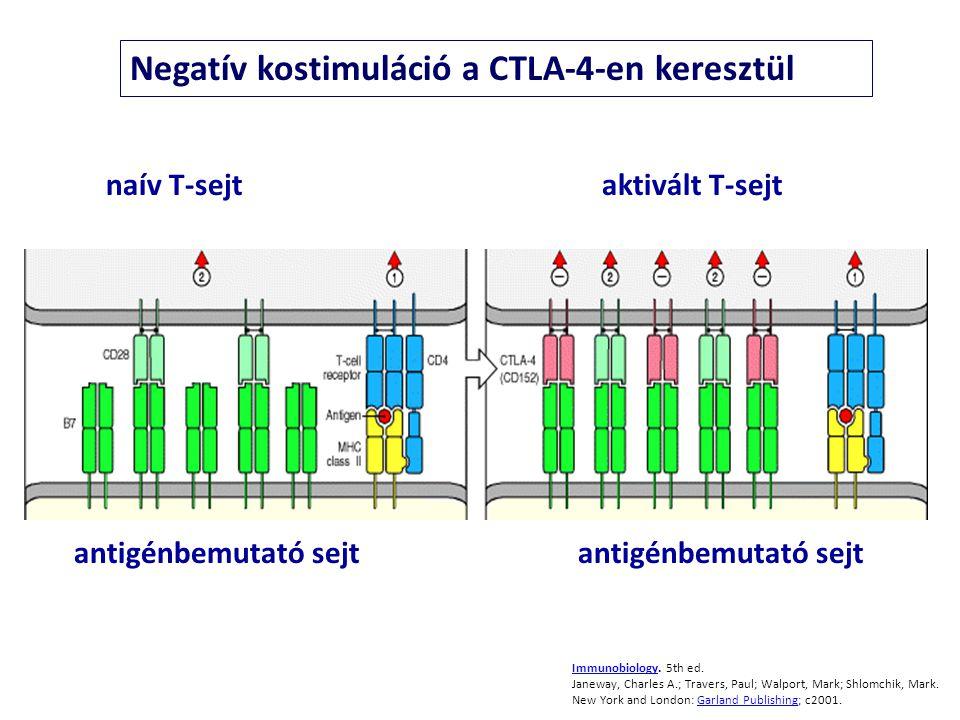 Negatív kostimuláció a CTLA-4-en keresztül