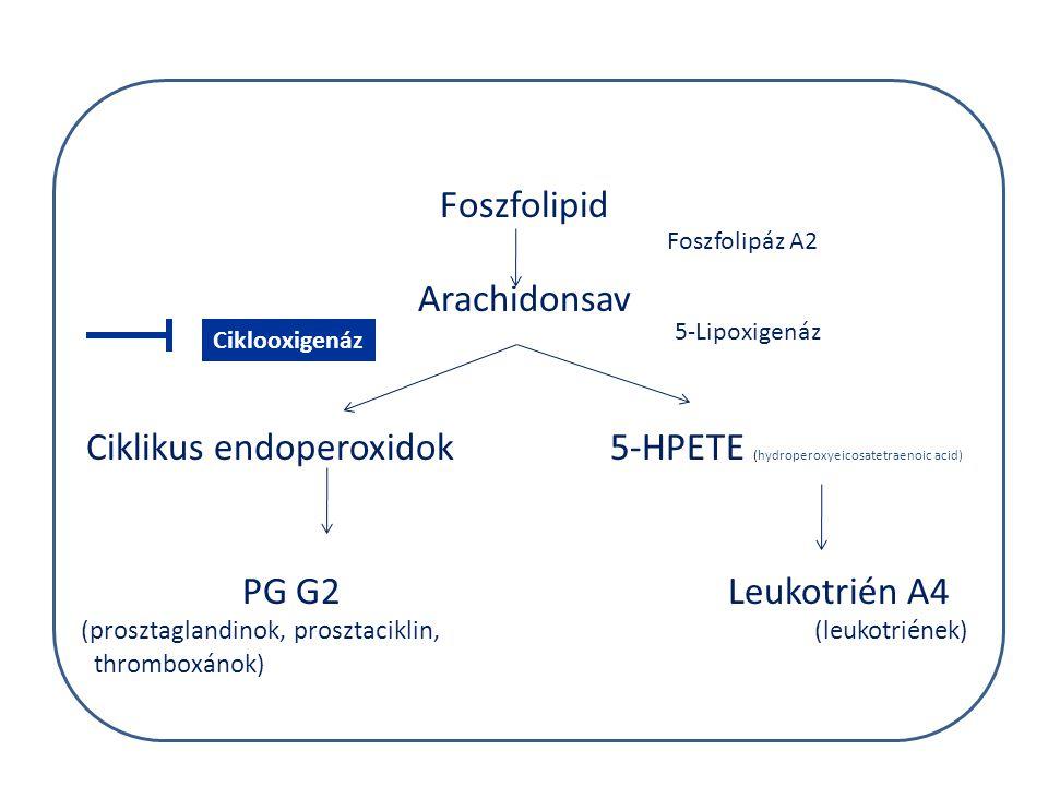Ciklikus endoperoxidok 5-HPETE (hydroperoxyeicosatetraenoic acid)