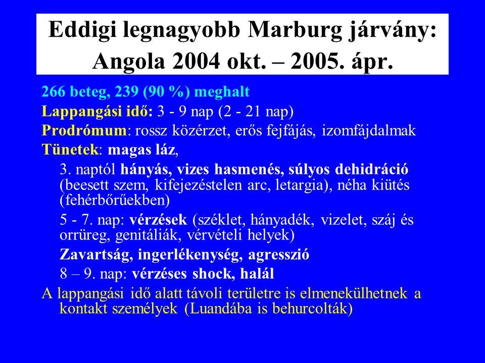 Eddigi legnagyobb Marburg járvány: Angola 2004 okt. – 2005. ápr.