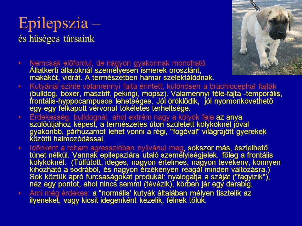 Epilepszia – és hűséges társaink