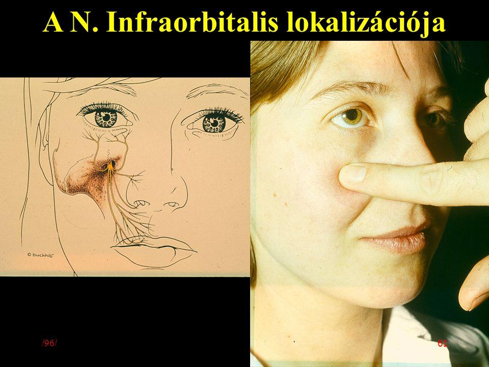 A N. Infraorbitalis lokalizációja