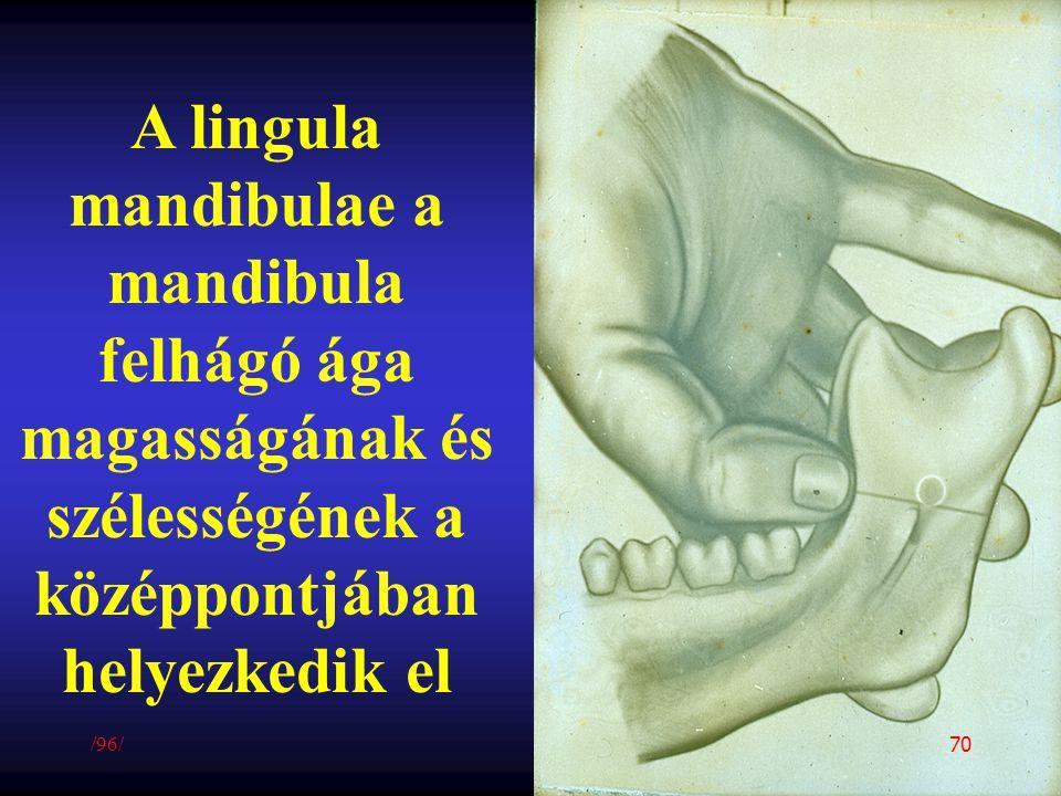 A lingula mandibulae a mandibula felhágó ága magasságának és szélességének a középpontjában helyezkedik el