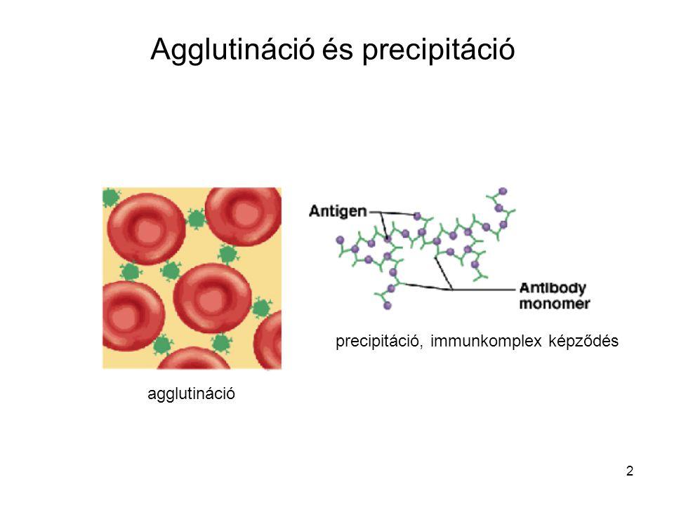 Agglutináció és precipitáció