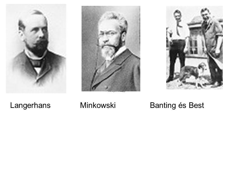 Langerhans Minkowski Banting és Best