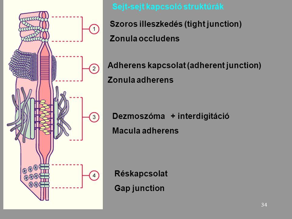 Sejt-sejt kapcsoló struktúrák