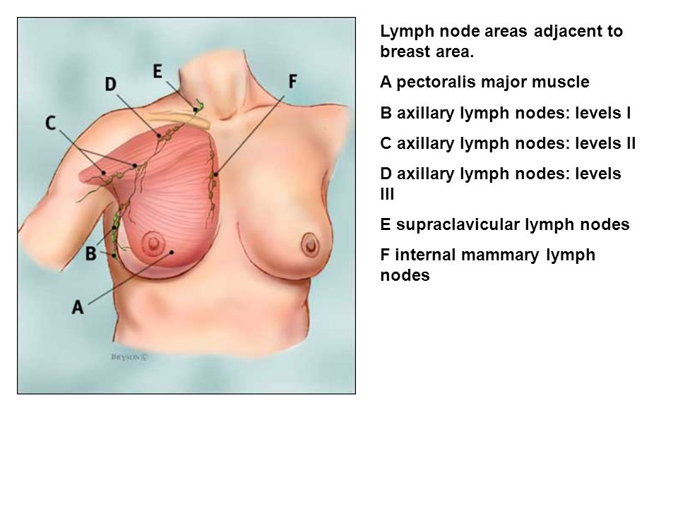 Lymph node areas adjacent to breast area.