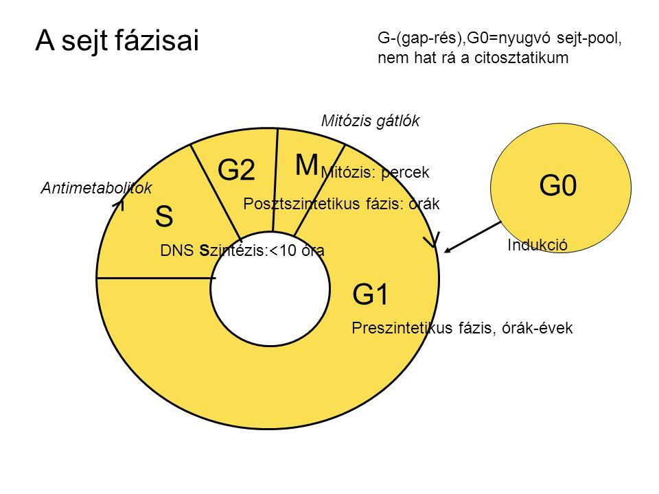 A sejt fázisai G-(gap-rés),G0=nyugvó sejt-pool, nem hat rá a citosztatikum. Mitózis gátlók. M. G2.
