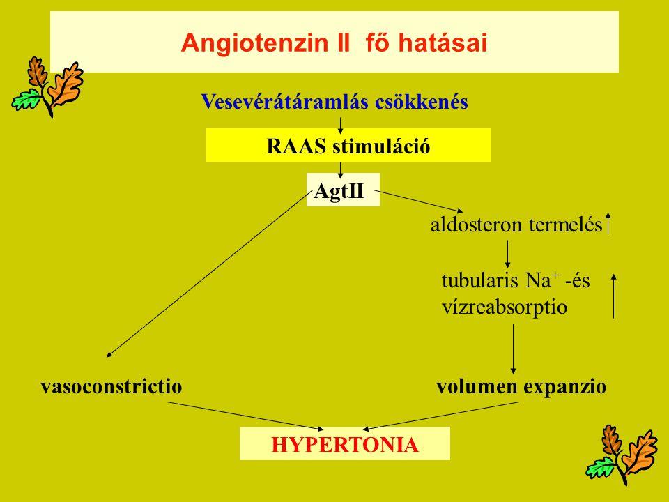 Angiotenzin II fő hatásai