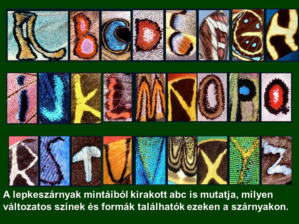 A lepkeszárnyak mintáiból kirakott abc is mutatja, milyen változatos színek és formák találhatók ezeken a szárnyakon.