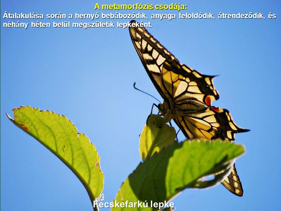 A metamorfózis csodája: