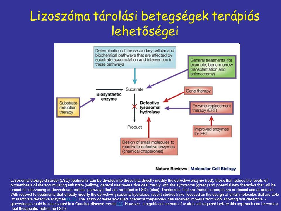 Lizoszóma tárolási betegségek terápiás lehetőségei