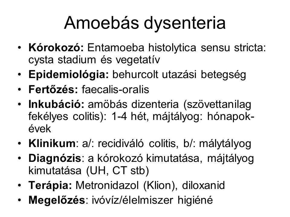 Amoebás dysenteria Kórokozó: Entamoeba histolytica sensu stricta: cysta stadium és vegetatív. Epidemiológia: behurcolt utazási betegség.