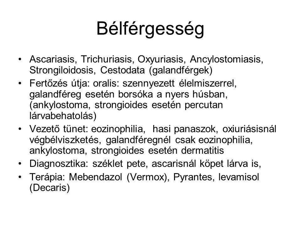 Bélférgesség Ascariasis, Trichuriasis, Oxyuriasis, Ancylostomiasis, Strongiloidosis, Cestodata (galandférgek)
