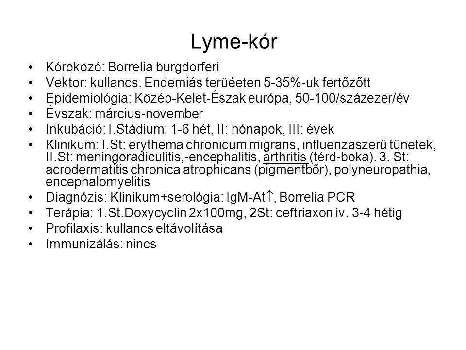 Lyme-kór Kórokozó: Borrelia burgdorferi