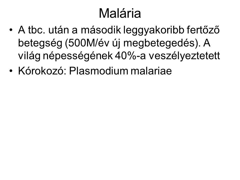 Malária A tbc. után a második leggyakoribb fertőző betegség (500M/év új megbetegedés). A világ népességének 40%-a veszélyeztetett.