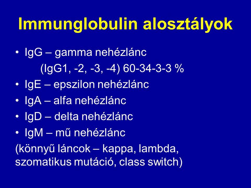 Immunglobulin alosztályok