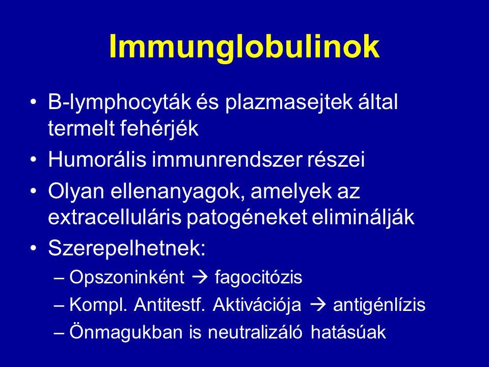 Immunglobulinok B-lymphocyták és plazmasejtek által termelt fehérjék