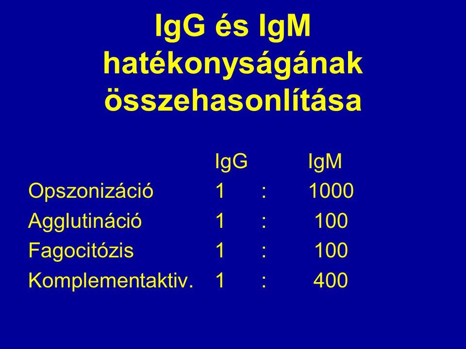 IgG és IgM hatékonyságának összehasonlítása