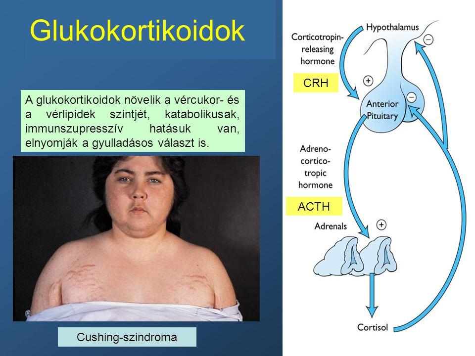 Glukokortikoidok CRH.