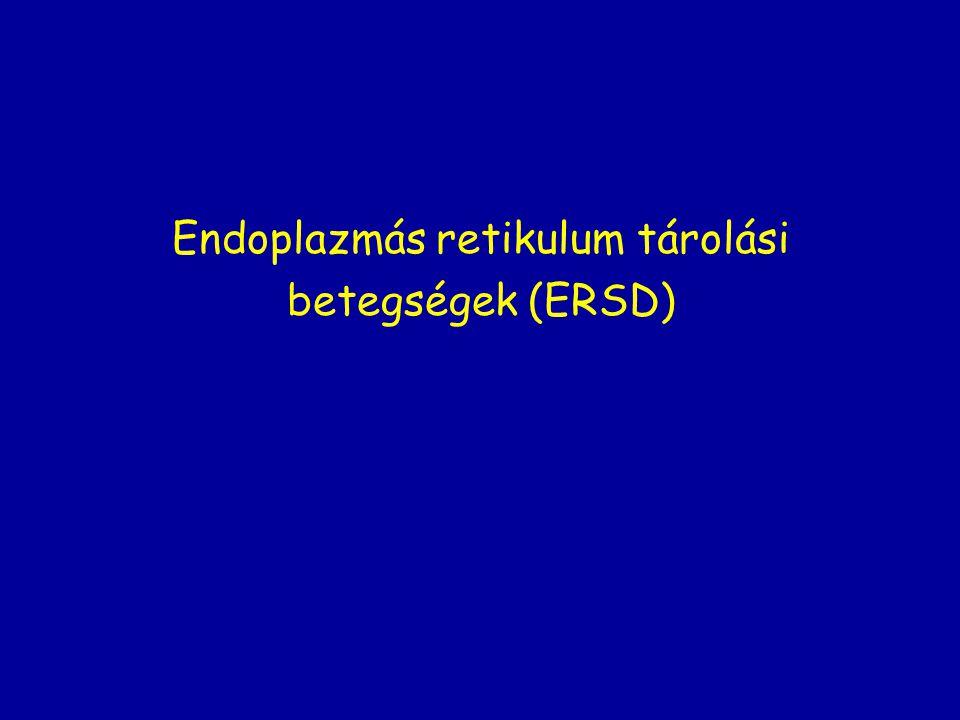 Endoplazmás retikulum tárolási