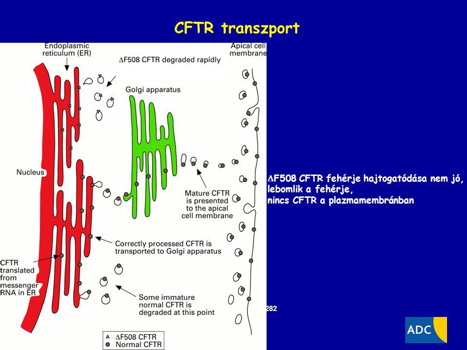 CFTR transzport F508 CFTR fehérje hajtogatódása nem jó,