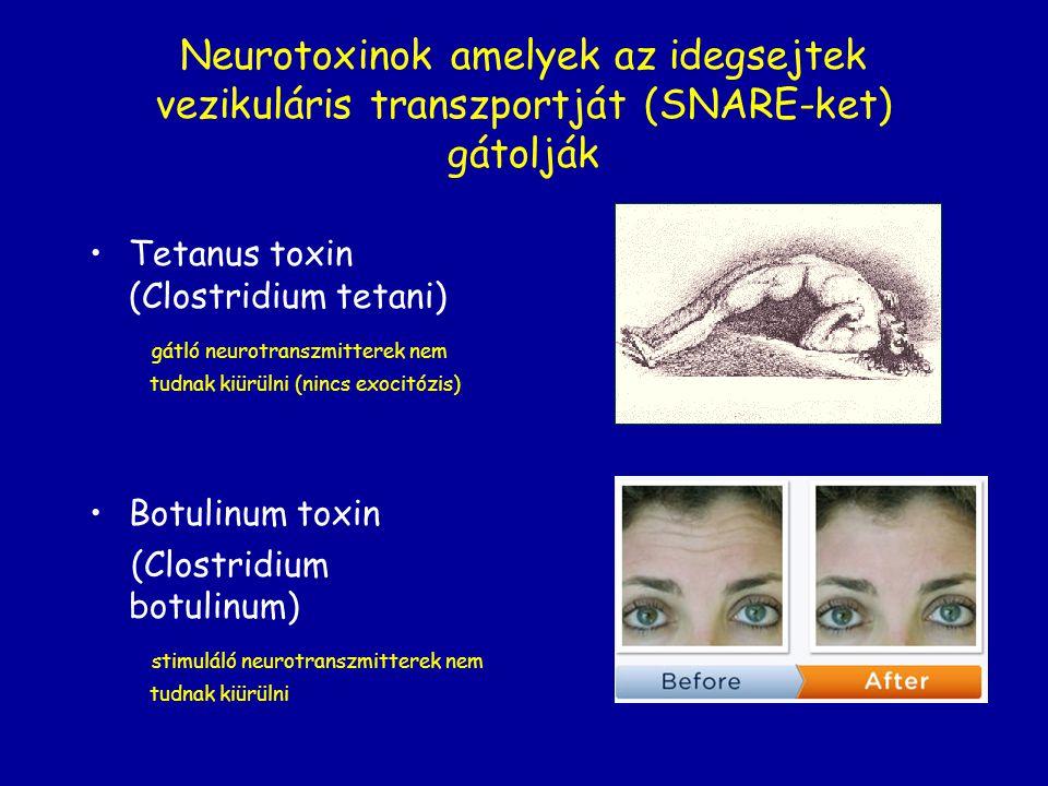 Neurotoxinok amelyek az idegsejtek vezikuláris transzportját (SNARE-ket) gátolják