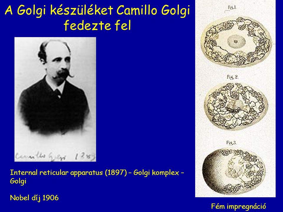 A Golgi készüléket Camillo Golgi fedezte fel