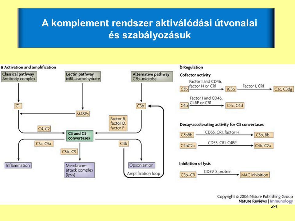 A komplement rendszer aktiválódási útvonalai és szabályozásuk