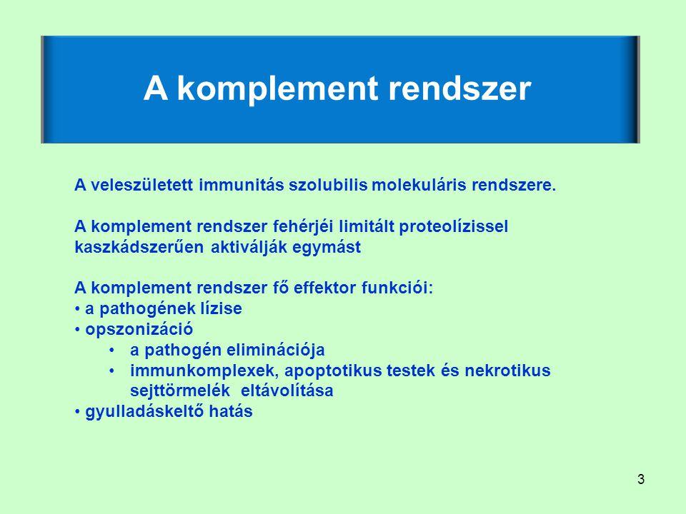 A komplement rendszer A veleszületett immunitás szolubilis molekuláris rendszere.