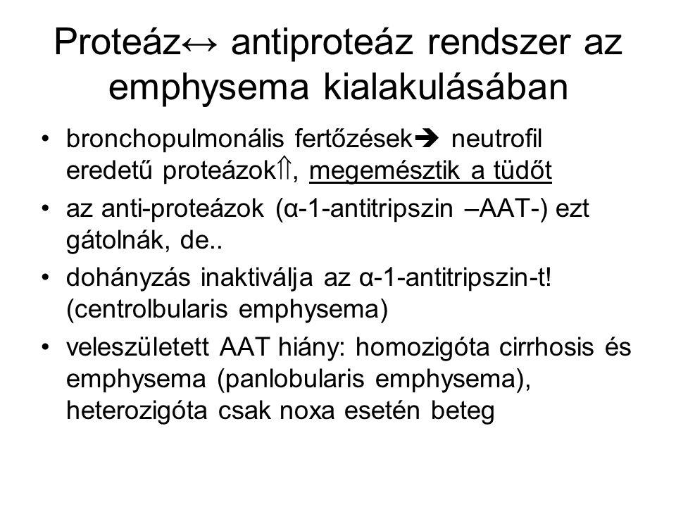 Proteáz↔ antiproteáz rendszer az emphysema kialakulásában