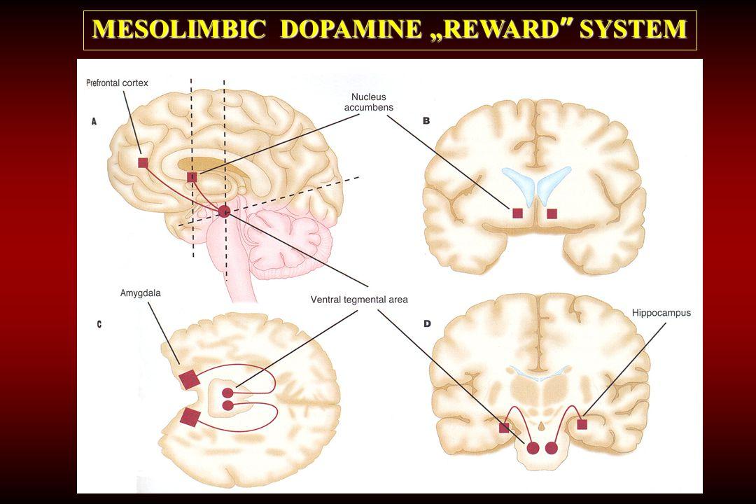 "MESOLIMBIC DOPAMINE ""REWARD SYSTEM"