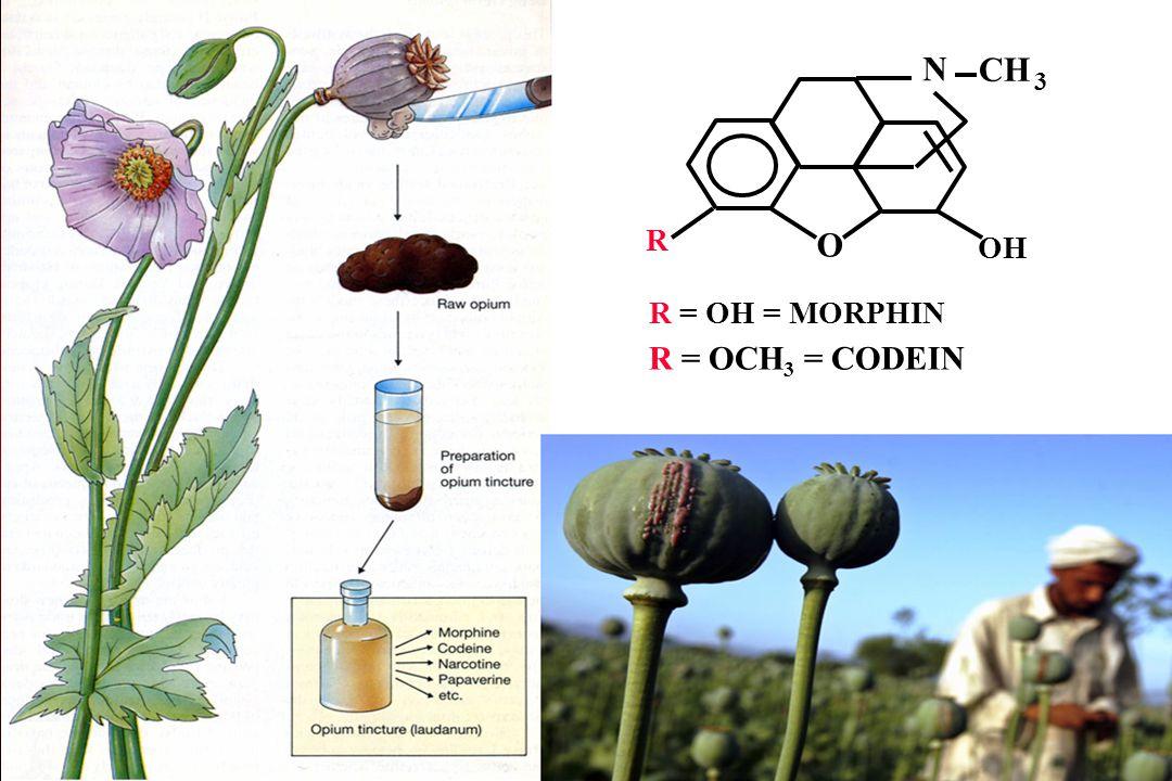 N CH 3 R O OH R = OH = MORPHIN R = OCH3 = CODEIN