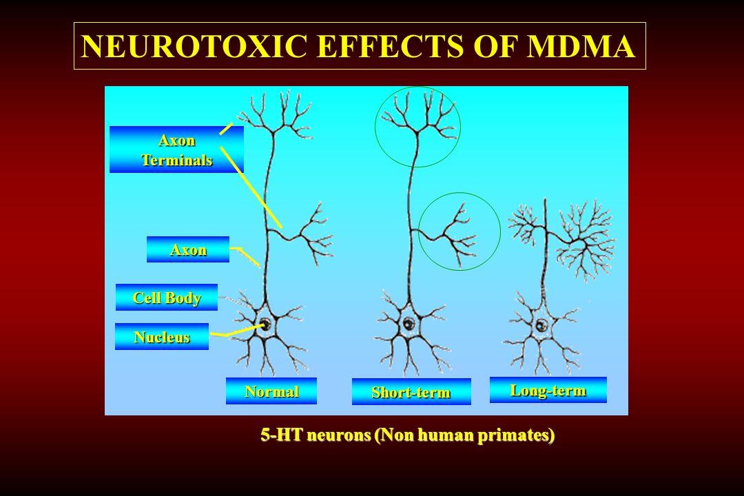 NEUROTOXIC EFFECTS OF MDMA
