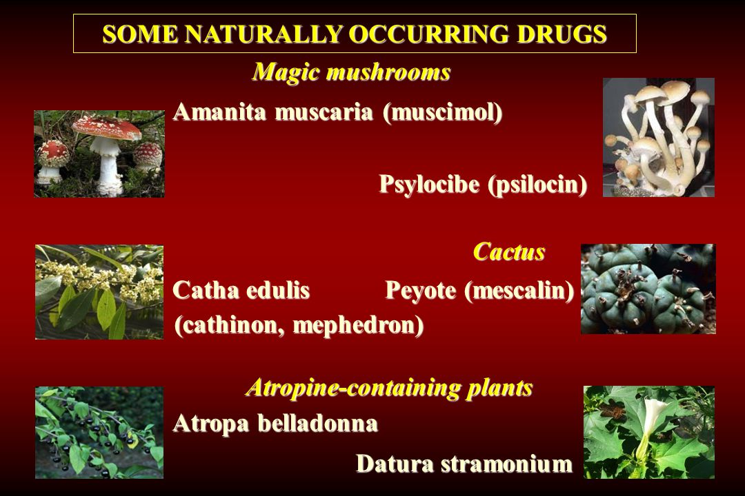 SOME NATURALLY OCCURRING DRUGS