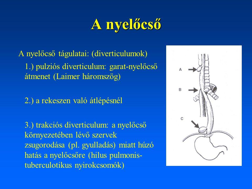A nyelőcső A nyelőcső tágulatai: (diverticulumok)