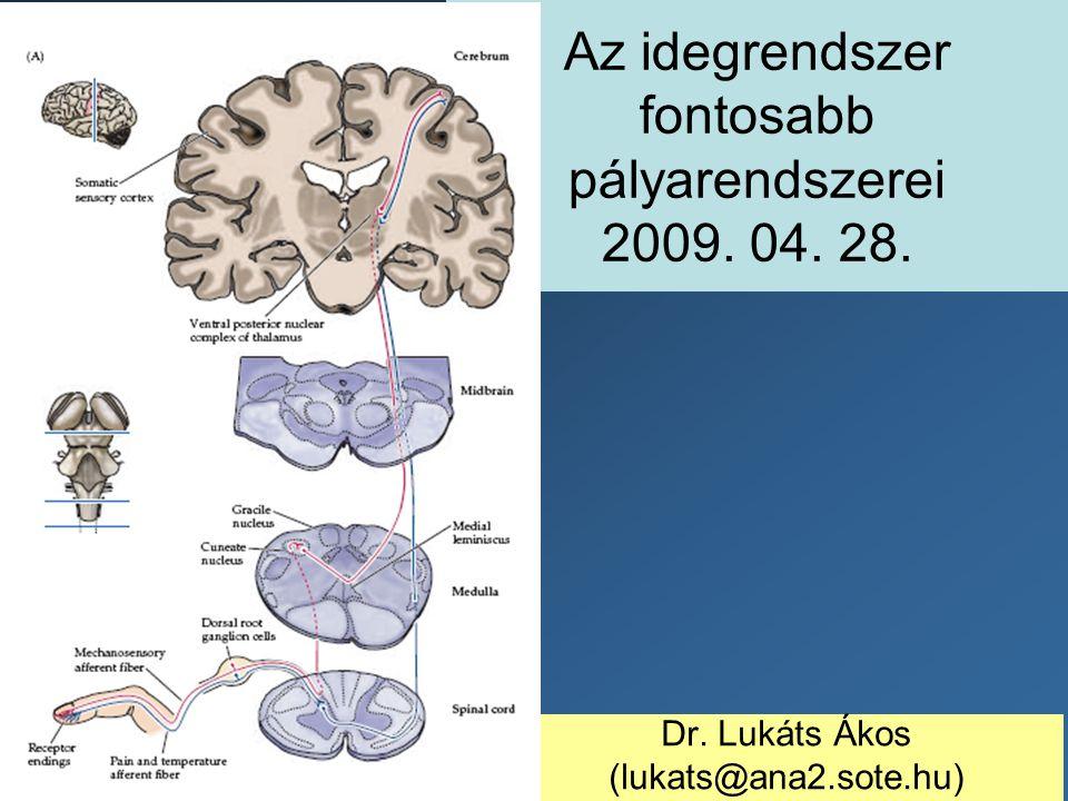 Az idegrendszer fontosabb pályarendszerei 2009. 04. 28.