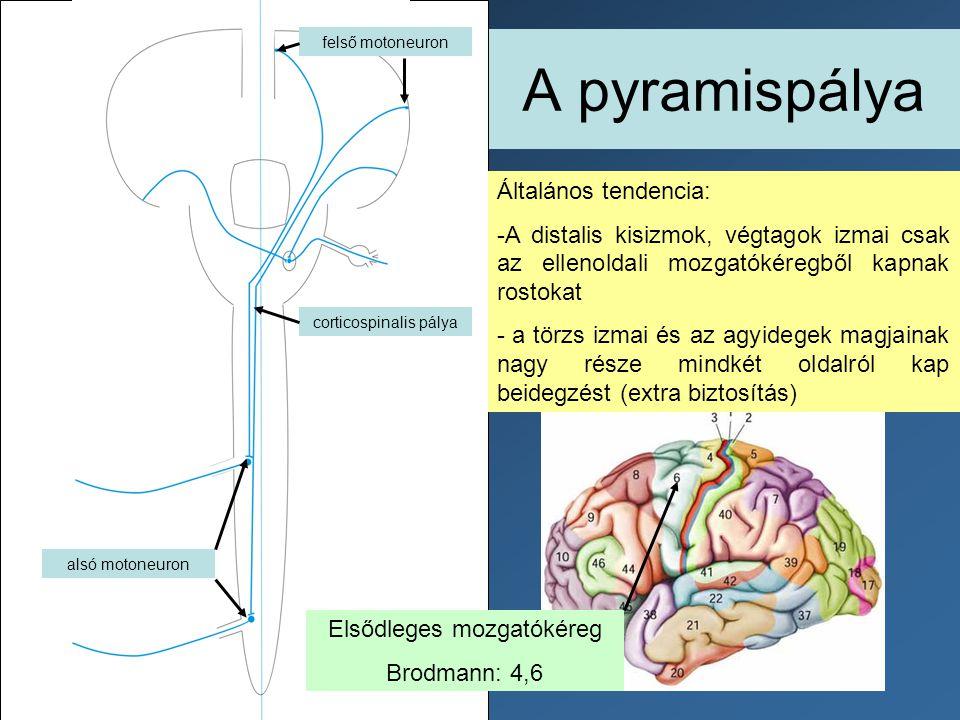 A pyramispálya Általános tendencia: