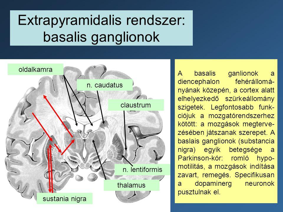 Extrapyramidalis rendszer: basalis ganglionok