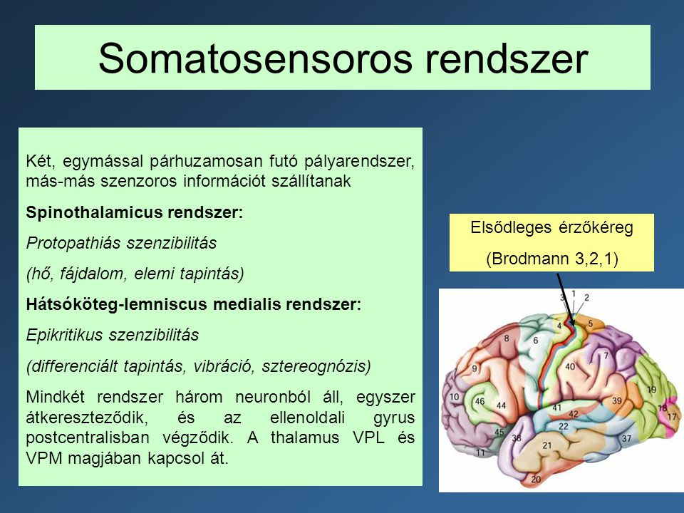 Somatosensoros rendszer