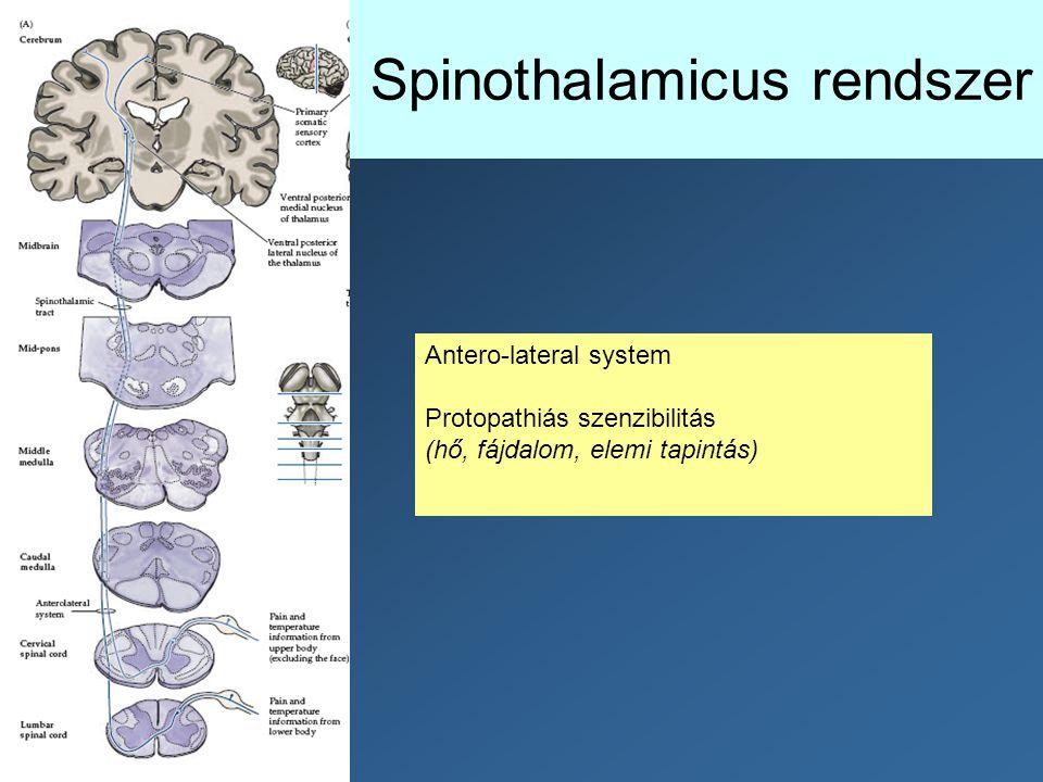 Spinothalamicus rendszer