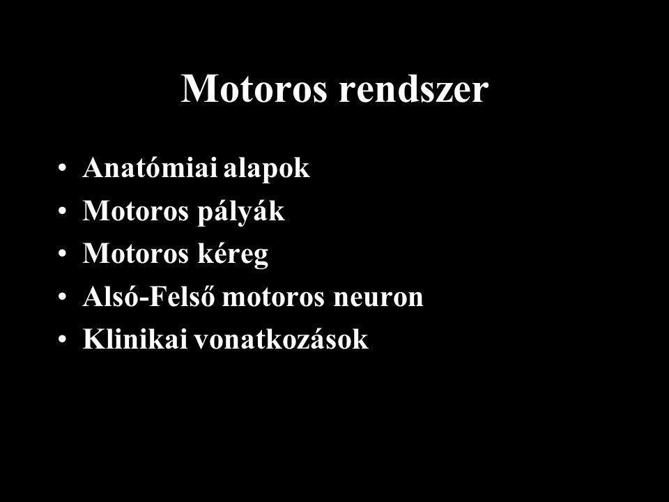 Motoros rendszer Anatómiai alapok Motoros pályák Motoros kéreg