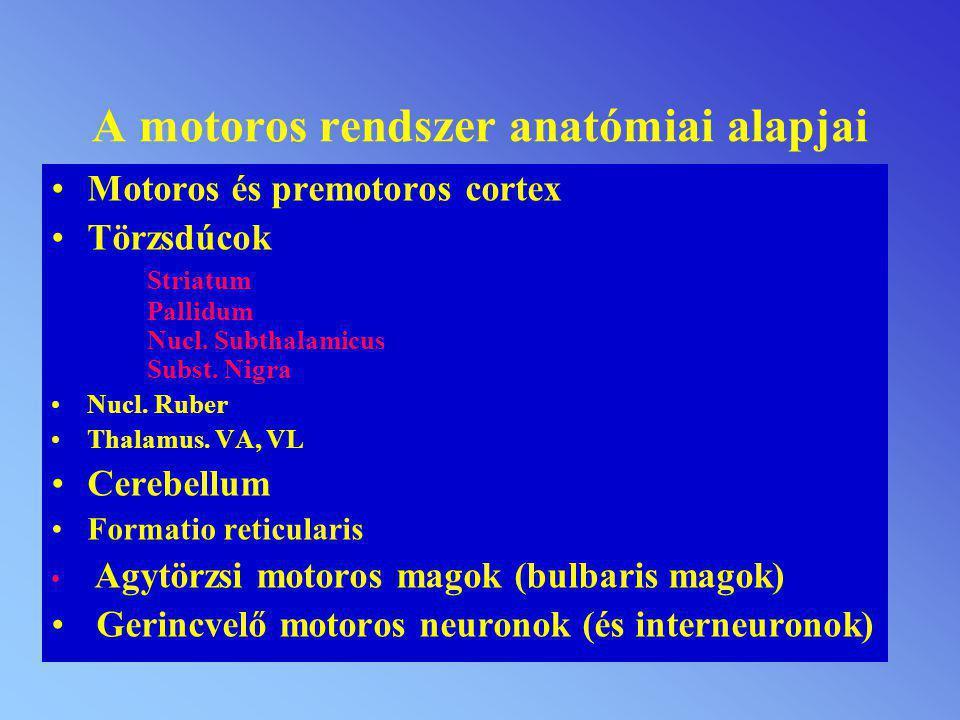 A motoros rendszer anatómiai alapjai
