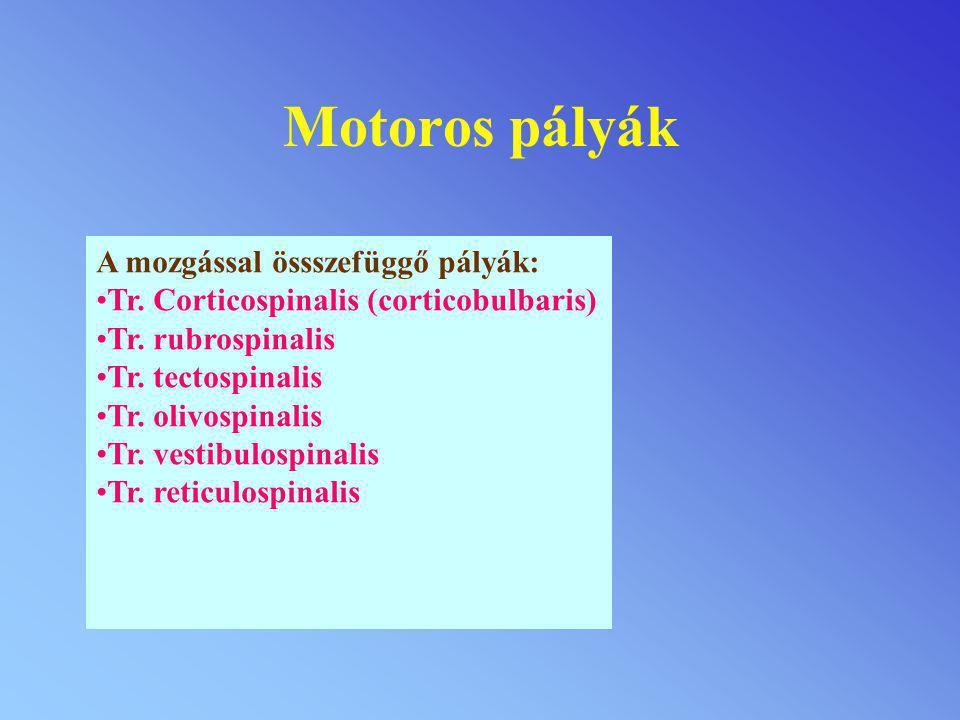 Motoros pályák A mozgással össszefüggő pályák: