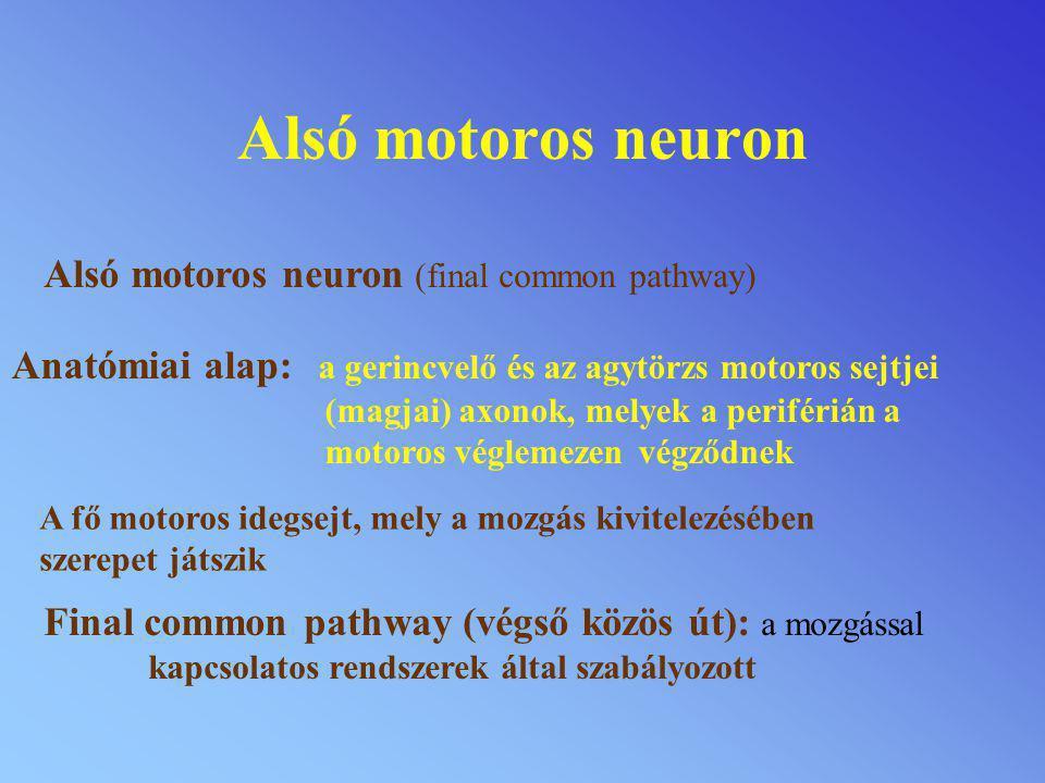 Alsó motoros neuron Alsó motoros neuron (final common pathway)