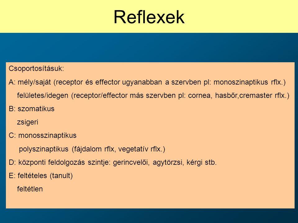 Reflexek Csoportosításuk: