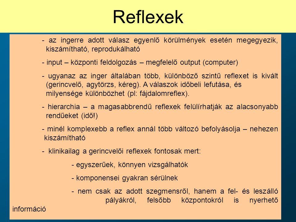 Reflexek - az ingerre adott válasz egyenlő körülmények esetén megegyezik, kiszámítható, reprodukálható.