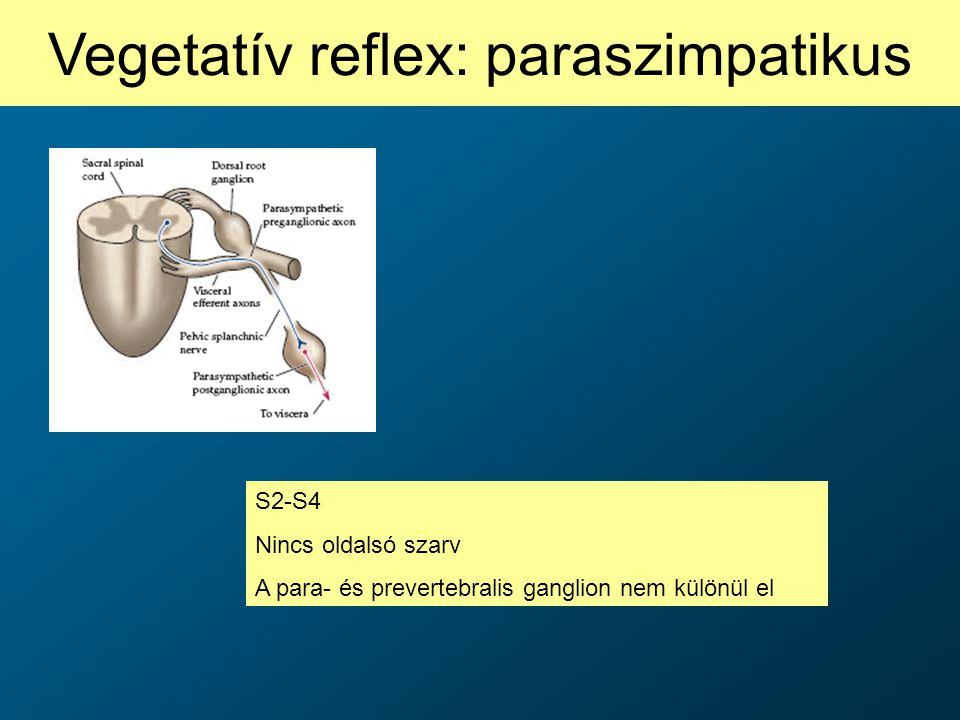 Vegetatív reflex: paraszimpatikus