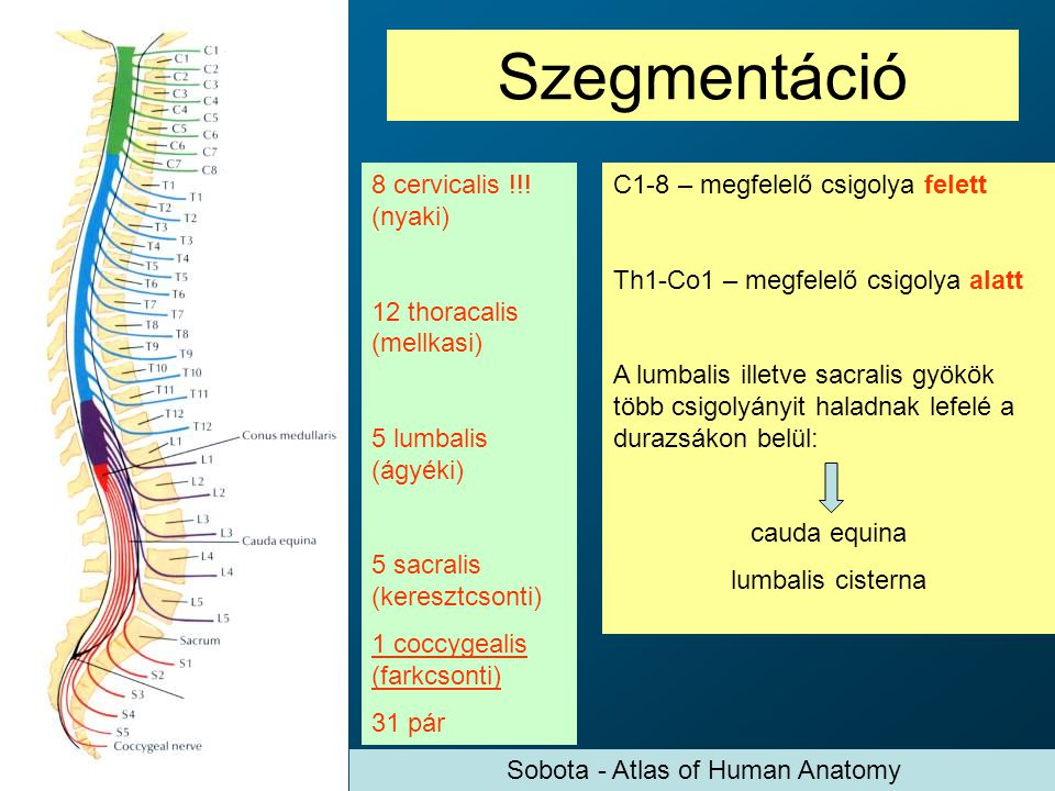 Sobota - Atlas of Human Anatomy